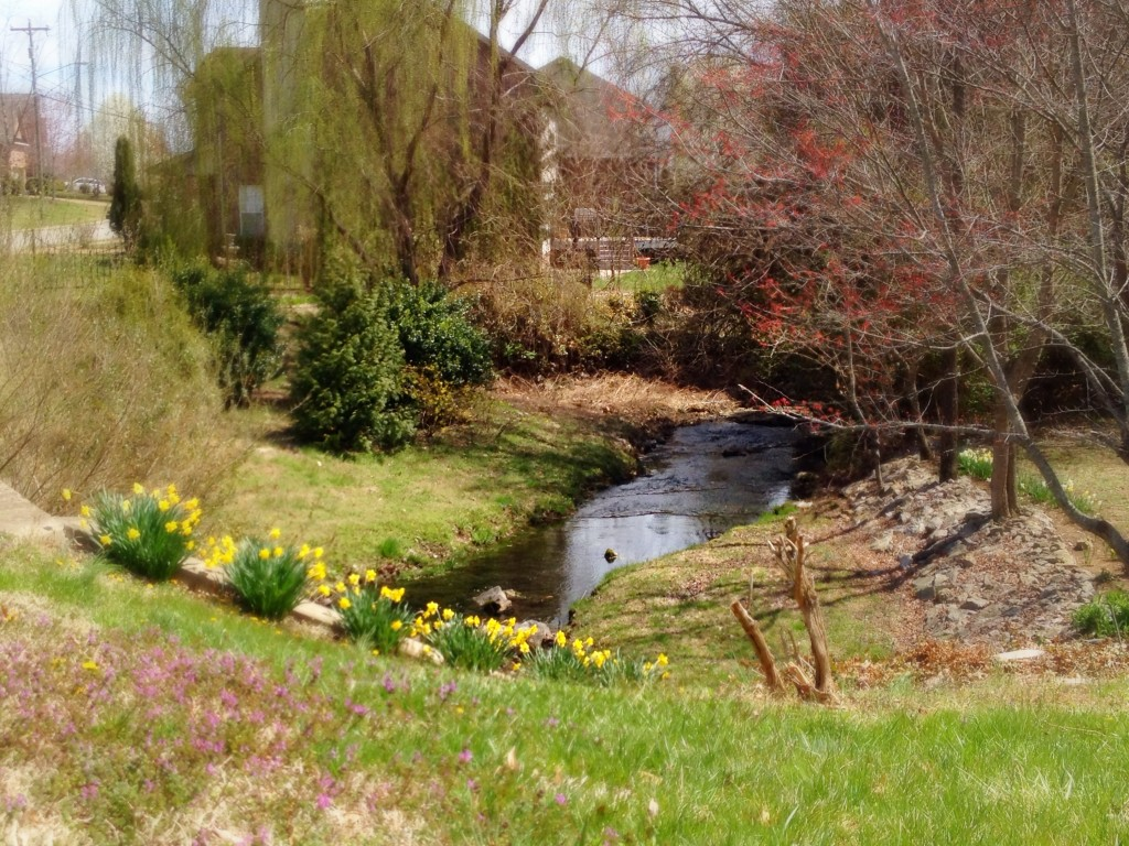 Expanded view of creekside daffies