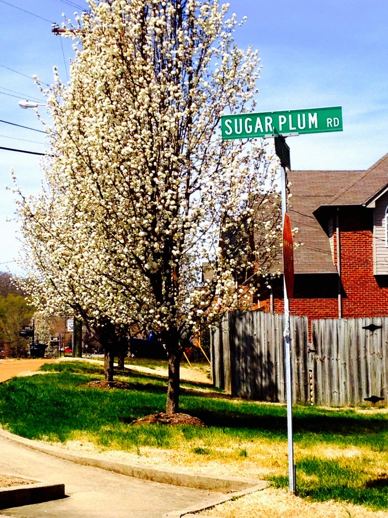Sugar Plum Road