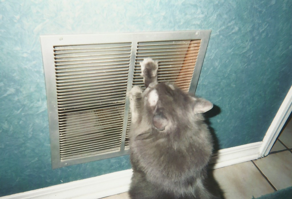 Strumming the vent with his paws